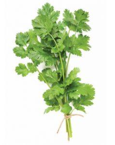 doterra-poweroele.de cilantro