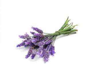 doterra-poweroele.de Lavender 2